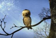 The Sparrow who kept his word, Dmitry Geller, LIAF, London International Animation Festival, 2012
