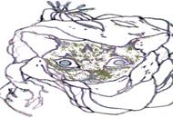 Rat Trap, Caleb Wood, LIAF, London International Animation Festival