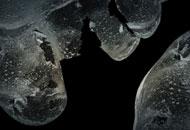 Squame, Nicolas Brault, LIAF, London International Animation Festival
